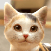 和我的猫在一起安卓版 V1.0